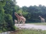 Tierpark_003