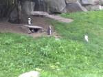 Tierpark_007